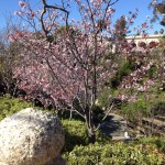 Canyon of Blooms in Japanese Friendship Garden